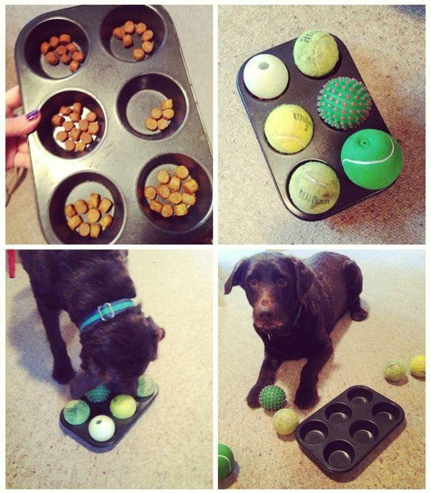 Παιχνίδια ευφυίας για σκύλους diy, muffin tin dog game