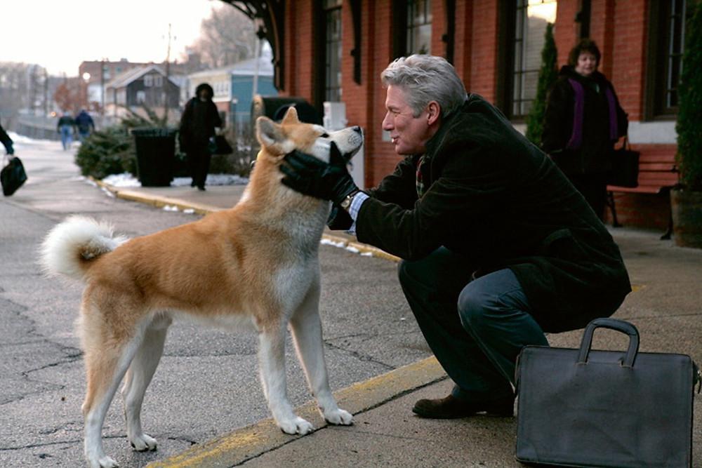 Χάτσικο - Προτάσεις ταινίες με σκύλους  i pettaxi gr