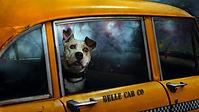 ταξί ζώων