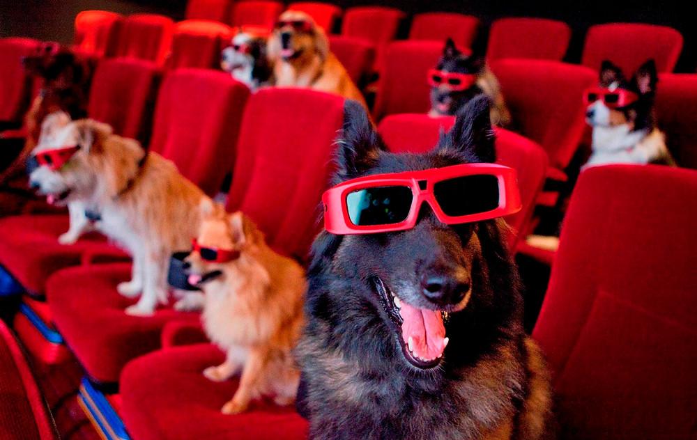 οι καλύτερες ταινίες με σκύλους και ζώα - i pet taxi blog
