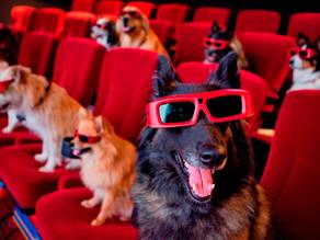 Οι καλύτερες ταινίες με σκύλους!