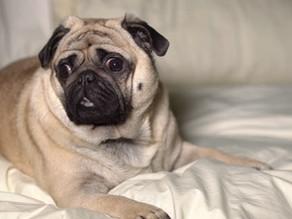 Φροντίδα για τον σκύλο με ευαίσθητο δέρμα