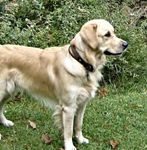 Oscar ο σκύλος θεραπείας