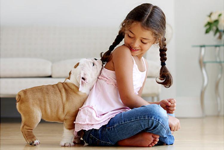 i pet taxi blog σκύλος οφέλη στην υγεία - αλλεργίες και ανοσοποιητικό