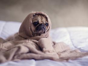 """Πότε κάνει """"πολύ κρύο"""" για έναν σκύλο;"""