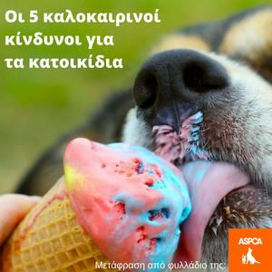Οι 5 καλοκαιρινοί κίνδυνοι για τα κατοικίδαι ASPCA | i pet taxi Αθήνα Αττικής Ελλάδα