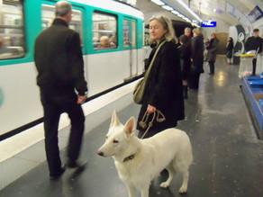 Σκύλος & Μέσα Μαζικής Μεταφοράς