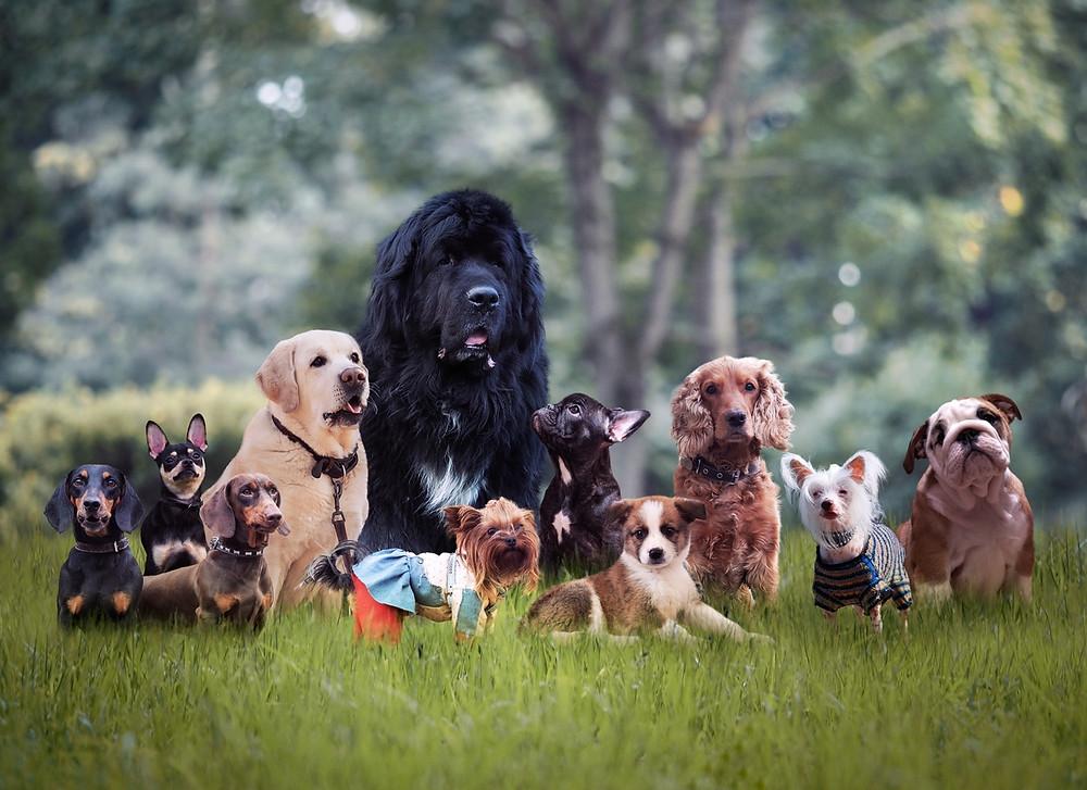 i  pet taxi blog Πως το AKC περιγράφει την κάθε φυλή σκύλου με μία πρόταση;