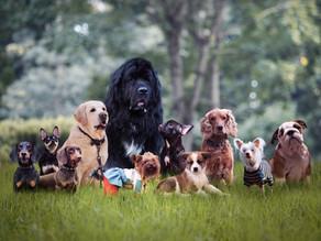 Πως το AKC περιγράφει την κάθε φυλή σκύλου με μία πρόταση;