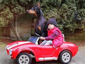Σκύλος & αυτοκίνητο