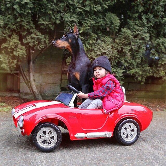Σκύλος και αυτοκίνητο. ταξίδι σκύλου με αυτοκίνητο