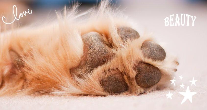 φροντίδα πατούσα σκύλου | i pet taxi | Αθήνα
