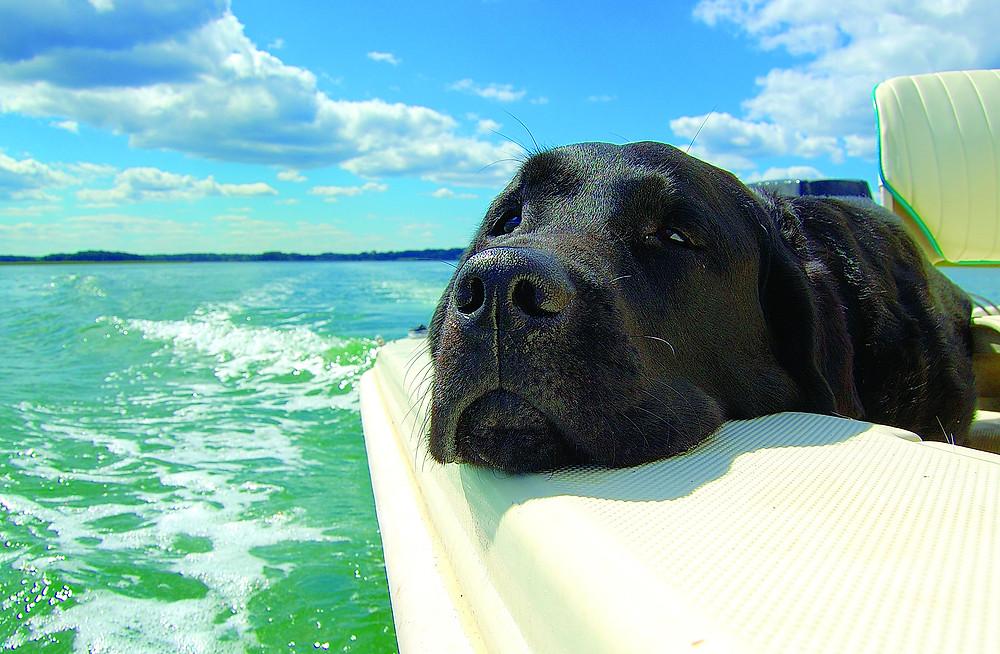 Μεταφορά κατοικίδιου σκύλου με πλοίου -επιτρέποτναι οι σκύλοι στα καράβια