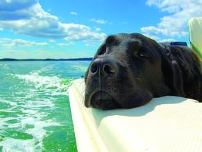 Σκύλος & πλοίο