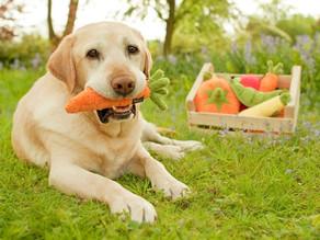 Γιατί να δώσετε καρότα στον σκύλο σας