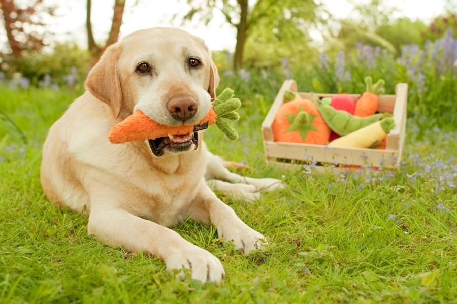 Γιατί να δώσετε καρότα στον σκύλο σας |i pet taxi
