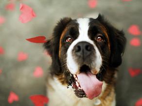Εσάς με ποιο τρόπο σας δείχνει ο σκύλος σας ότι σας αγαπά;
