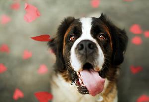 Πως ένας σκύλος δείχνει την αγάπη του -i pet taxi blog