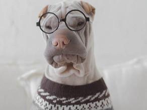 Τεστ iq για σκύλους