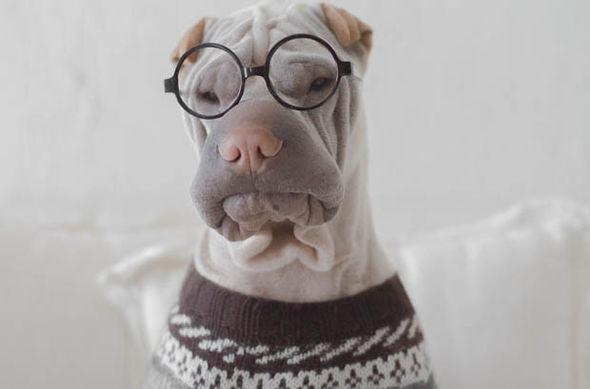 τεστ ευφυίας για σκύλους, βρείτε το iq του σκύλου σας