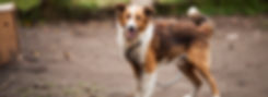 adorable-animal-blur-663573.jpg