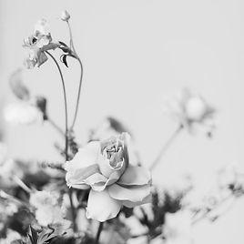 natural-perfume_mellow.jpg