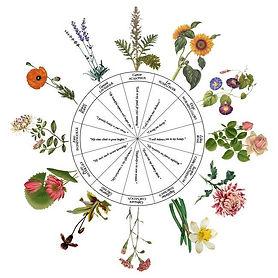 astrology_plant_02.jpg