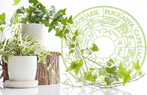 astrology_plant_04.jpg