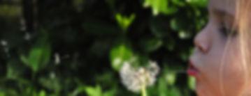 blowball-384598_1920.jpg