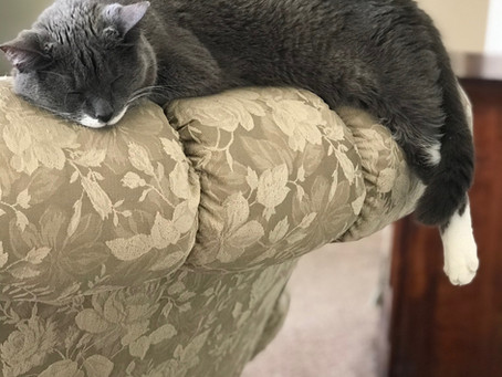 Does your cat scratch your furniture?
