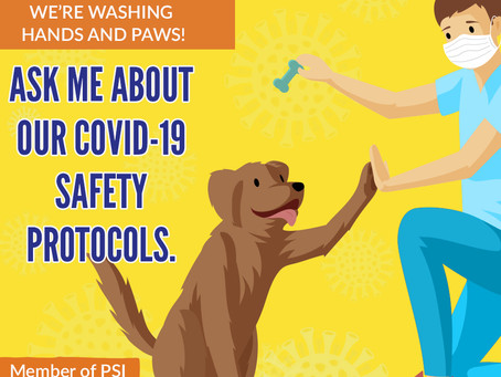 Pet Sitting during the COVID-19 Pandemic
