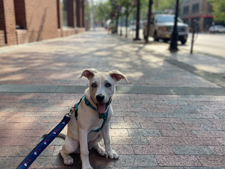 Dog walking and pet sitting services in Old City