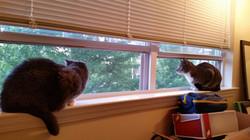 Cat Sitter, Cat Sitting, Cats, NJ