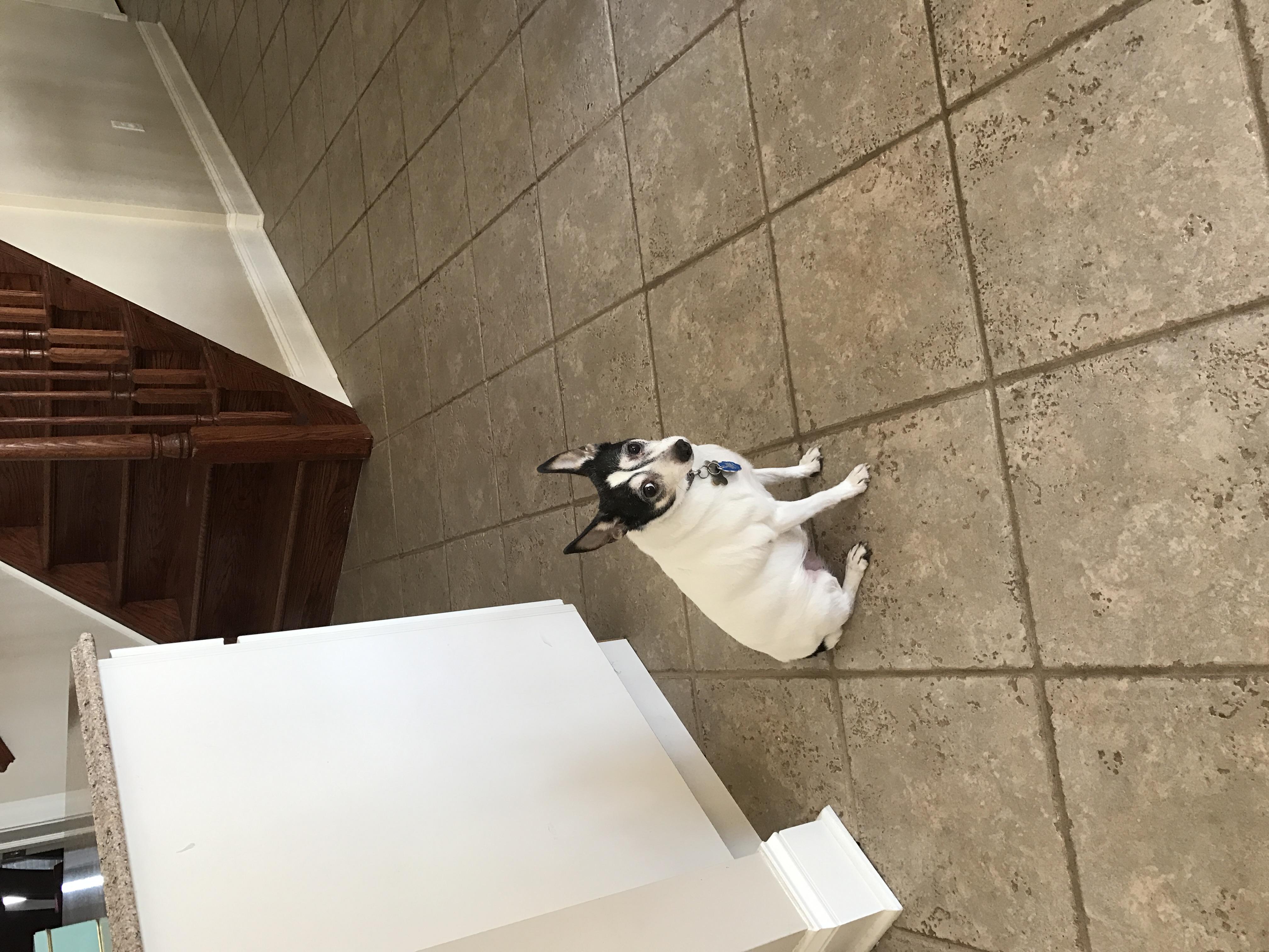 Pet Sitting Princeton