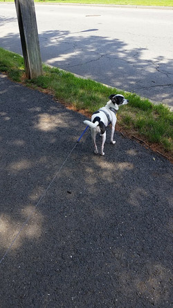 Simply Yours Concierge Dog Walking