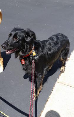 dog walking highland park