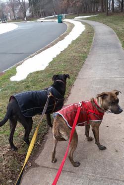 best dog walker princeton