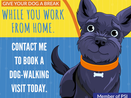Give your pet a break while you work from home