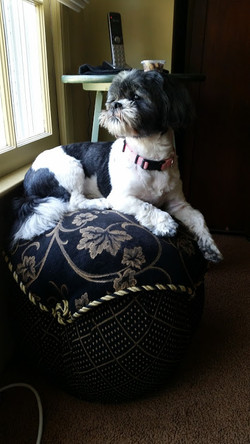 pet sitting franklin park