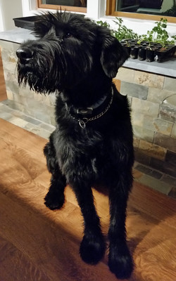 Best Dog Walker South Brunswick