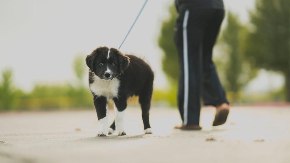 Dog walking nj