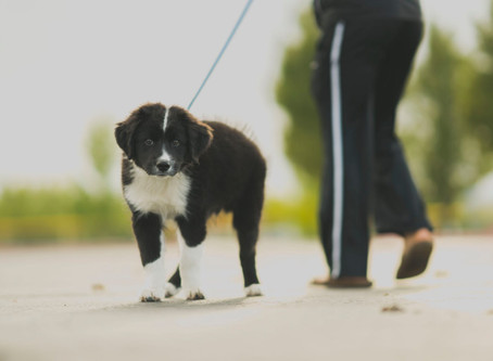 Benefits of Hiring a Mid Day Dog Walker