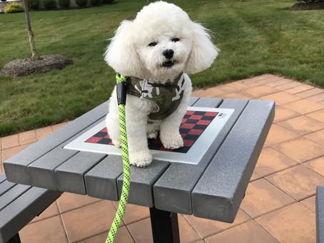 Pet Interview: Apollo in Princeton