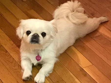 Pet Interview: Mia in North Brunswick