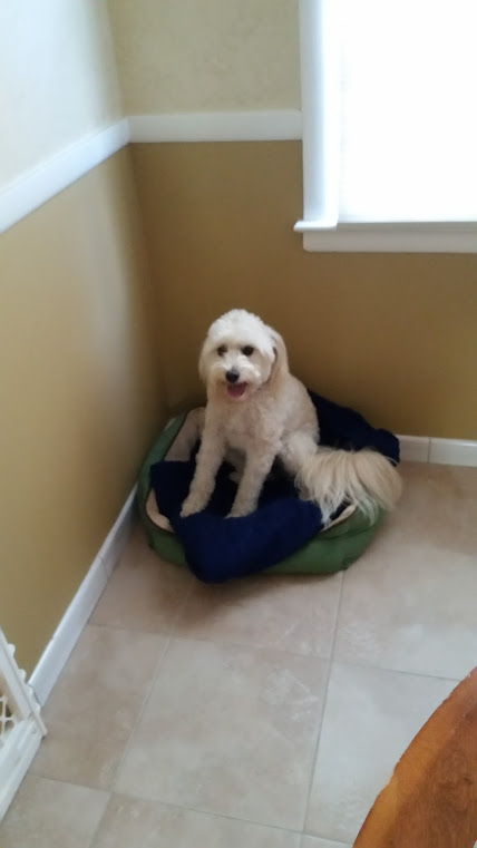 pet sitting west windsor