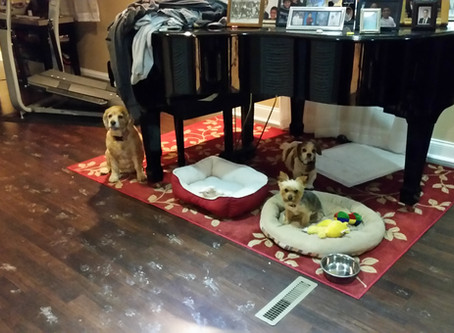 Pet Interview: Charlie, Gracie, and Cali in South Brunswick