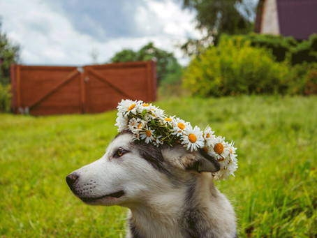 Is Your Pet Ready for Spring?