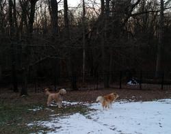 best middlesex county dog walker