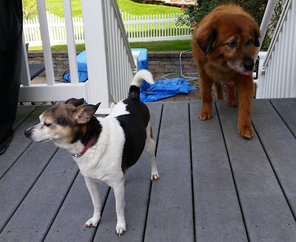 Pet Interview: Dax and Moo in South Brunswick