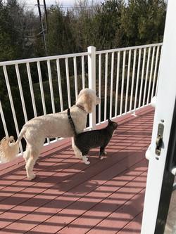 Dog Walking South Brunswick